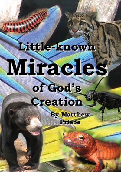 Little-known Miracles of God's Creation