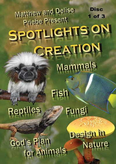 Spotlights on Creation (3 Discs)
