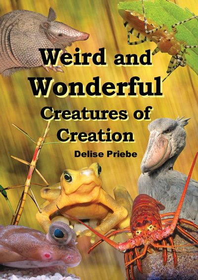 Weird and Wonderful Creatures of Creation [for Kids]